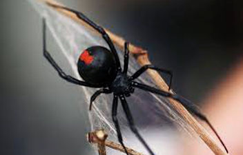 pest control services - spiders