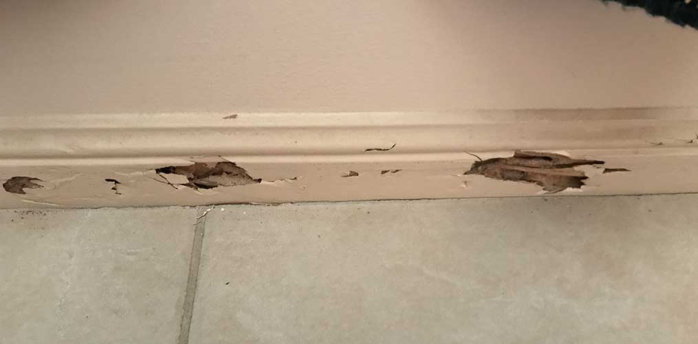How to tell if its time for a Pest Treatment North Brisbane